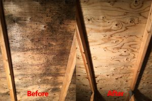 attic mold removal services in Kitchener, Ontario