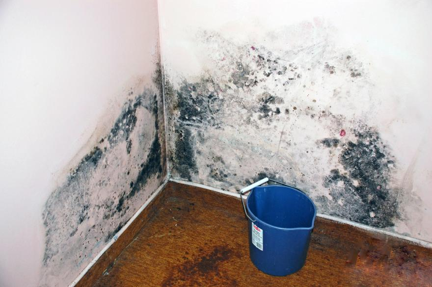 level 2 mold contamination Kitchener Ontario