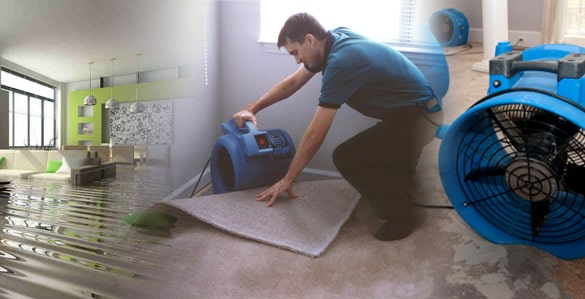 WATER DAMAGE REMOVAL Kitchener, Ontario